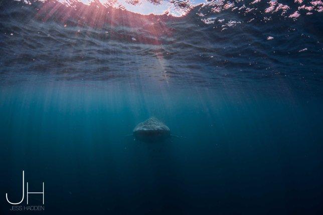 20160717 Diving 9